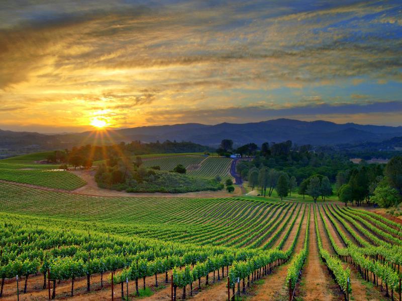 Vinograd je slika države, vojske, naroda, obitelji, pojedinca, te vjere