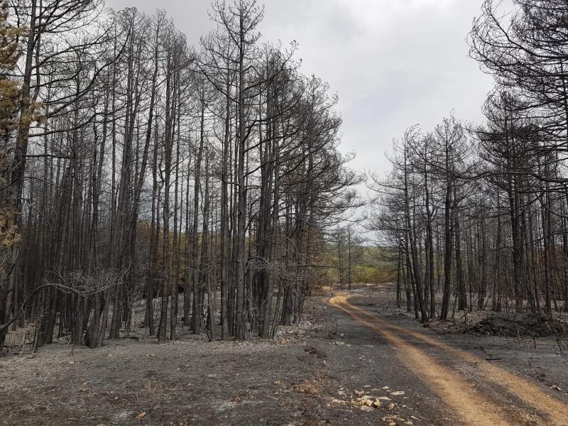 Izgorjela šuma